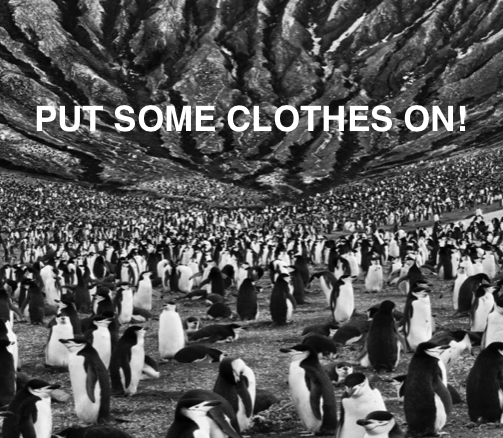 Naked penguins